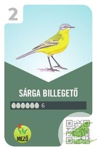 Külsőleg a madaraknak elég nagy hosszú testük van, amely egy háromszög alakú, és a.